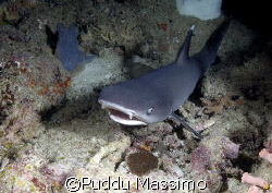 shark in cave,taken in maldives with nikon d2x and 12-24 ... by Puddu Massimo 